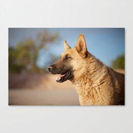 Chilean Dog Canvas Print