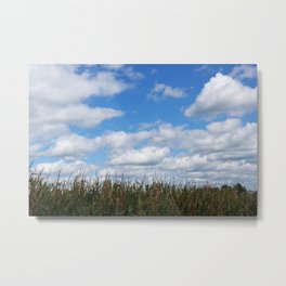 "Corn field in autumn with ""popcorn"" clouds Metal Print"