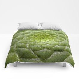 Aeonium Tabuliforme Comforters