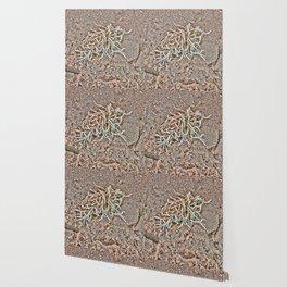 Coralline Seaweed Shells on beach Wallpaper