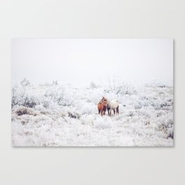 Two Winter Horses Canvas Print
