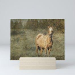 Young Palomino Bachelor Stallion Mini Art Print