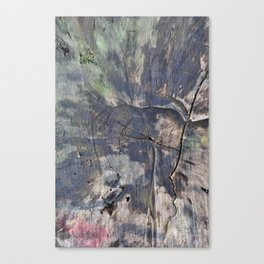 Tree :: Laurel River, North Carolina Canvas Print