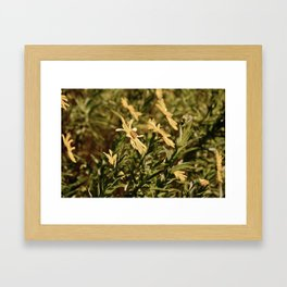 Sunward Framed Art Print
