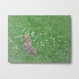 Rabbit eating clover Metal Print