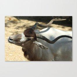 Addax, Sahara Desert Antelope Canvas Print