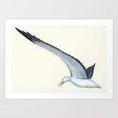 Toaroa in flight Art Print