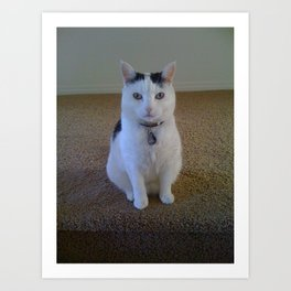 LB Kitty with 2 different colored eyes Art Print