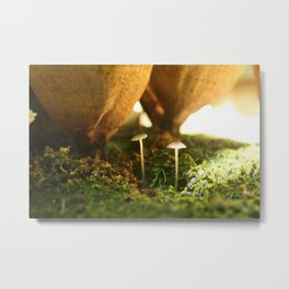 Tiny Forest Fungus Metal Print