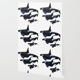 Orca (Orcinus orca) Wallpaper