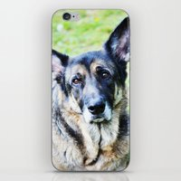 german shepherd iPhone & iPod Skins featuring GERMAN SHEPHERD PHOTOGRAPH by Allyson Johnson