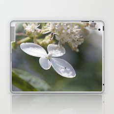 4 petal flower Laptop & iPad Skin