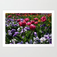 Tulips and Pansies Art Print