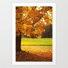 Golden Maple Fall  Art Print