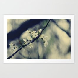 Focus on spring  Art Print