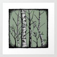 Birch Trees - Colour Art Print