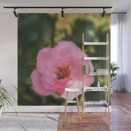 Pink Rose Blossom  & Beetle Wall Mural