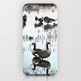 Flocks of Geese and Ducks Beautifully Reflected  iPhone Case