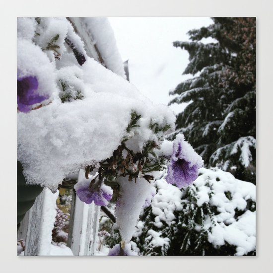 Snow in Spring Canvas Print