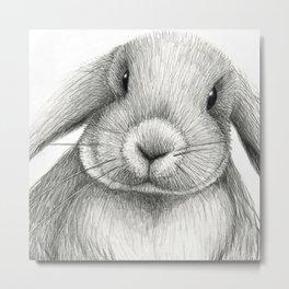 Lop eared rabbit face Metal Print