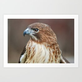 Red Hawk Profile Art Print