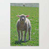 lamb Canvas Prints featuring Lamb by  Alexia Miles photography