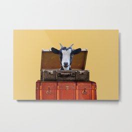Goat in old suitcases  Metal Print