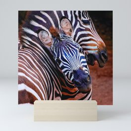 Two Zebras Playing With Each Other Mini Art Print