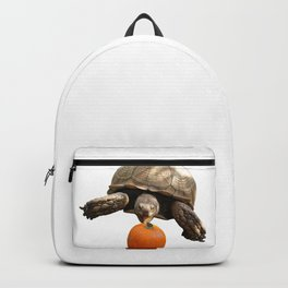 Sulcata Tortoise with Pumpkin Backpack