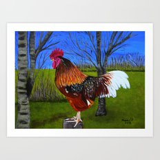Rooster in the back yard Art Print