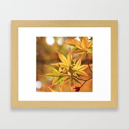 Colorful Japanese Maple In Fall Macro Photography Framed Art Print