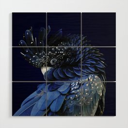 Australian Red-Tailed Black Cockatoo in Blue Wood Wall Art