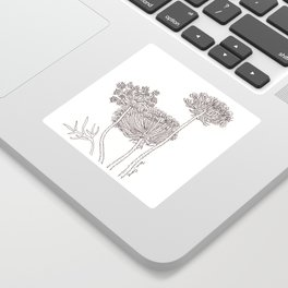 Queen Anne's Lace Sticker