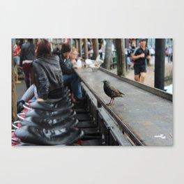 Candem bird Canvas Print