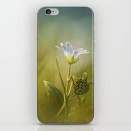 Cerastium fontanum subsp. vulgare  iPhone Skin