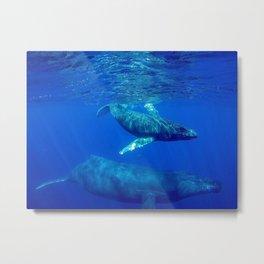 Underwater Humpbacks 10 Metal Print