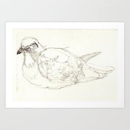 Pigeon Drawing Art Print