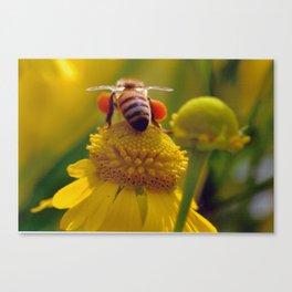 Bee Buzzy Canvas Print