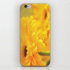 Gerbera Focus iPhone & iPod Skin