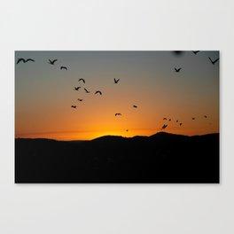 Ibis Canvas Print