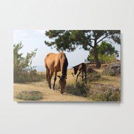 horses Metal Print