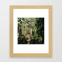 Vegetation of the Cerrado Framed Art Print