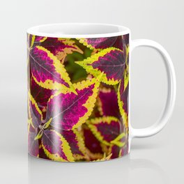Coleus or Painted Nettle Coffee Mug