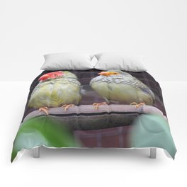 Star Finches Comforters