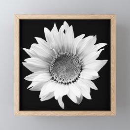 Sunflower In Black And White #decor #society6 #buyart Framed Mini Art Print