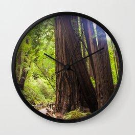 Muir Woods Path Wall Clock
