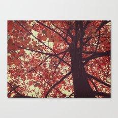 color of the season Canvas Print