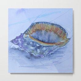 Helmet Shell -Galeodea echinophora- Metal Print