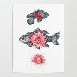 Blooming in the pond Poster