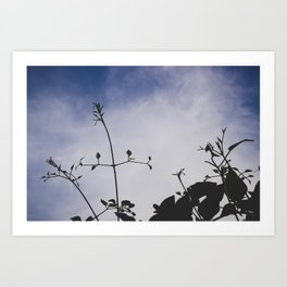 backlit twining Art Print